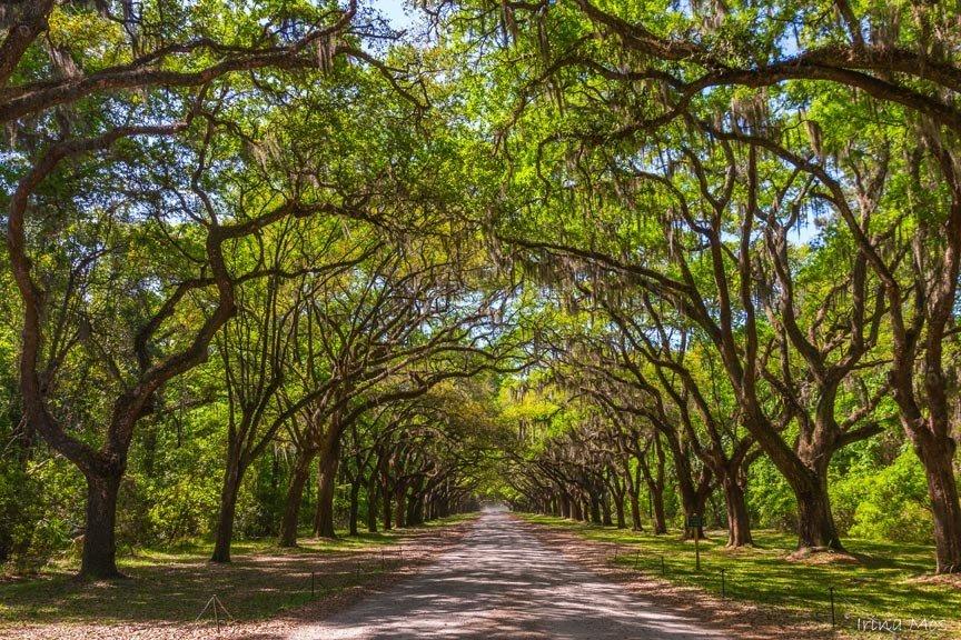 historic savannah attractions